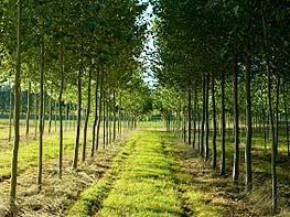 10-tree-rows